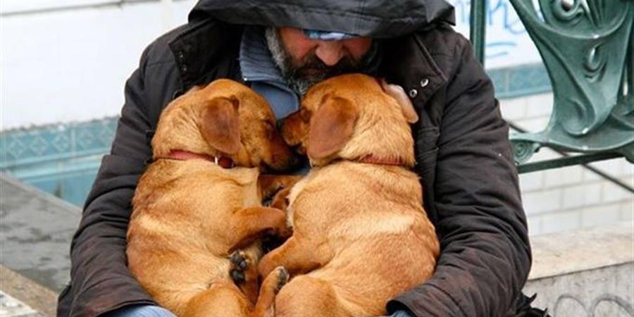 Aidez-nous à financer la stérilisation des chiens et chats ! - S.O.S. Croquettes Alsace