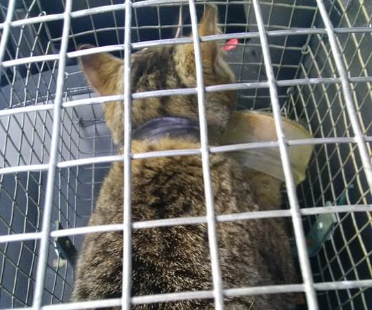 Chalet de quarantaine et convalescence - Paroles de chats