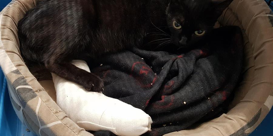 Urgent appel à l'aide pour l'operation de Mila - Patounes de chats