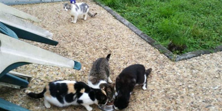 Les survivants ! - Patounes de chats