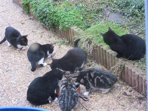 SOS pour 15 chats!!! - chats  errants en détresse