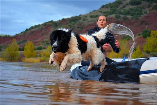 Education canine / Sauvetage en mer - Les Pattounes Du Sud
