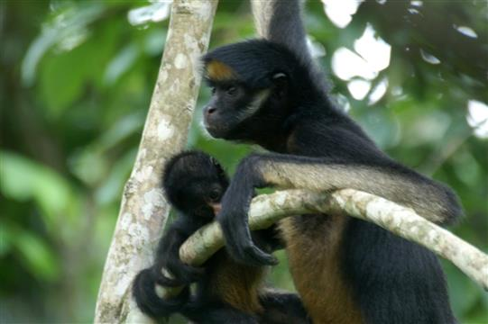 AmaZOOnico : Refuge pour animaux sauvages en Equateur - AVES France