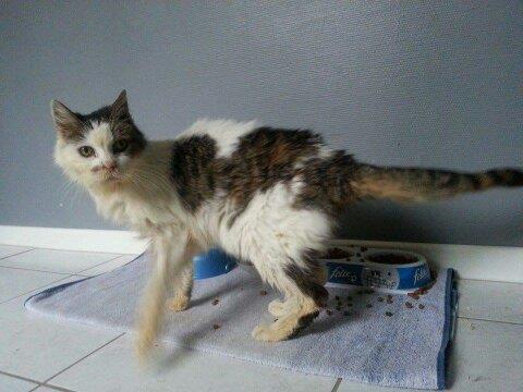 Pour ANGIE <3 - nos felins concitoyens d'Aix en othe10