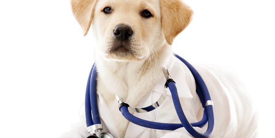 Aide aux frais vétérinaires de la S.P.A. de Colmar - S.P.A. de Colmar
