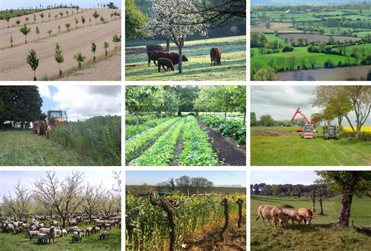 Association française d'Agroforesterie - Soutenez nos actions - AFAF Association Française d'AgroForesterie
