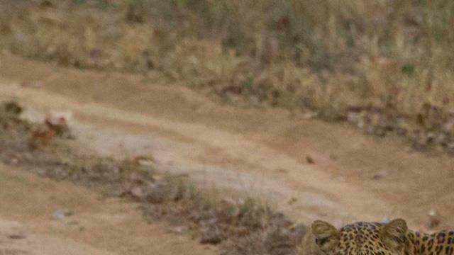 Soutenez les actions de TENDUA en faveur de la biodiversité! - TENDUA