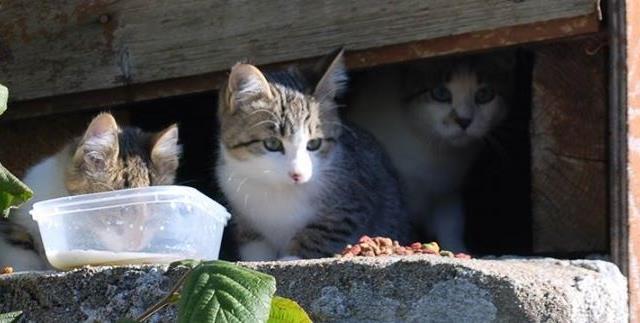 Pour stériliser des chats errants - ARPA Chats