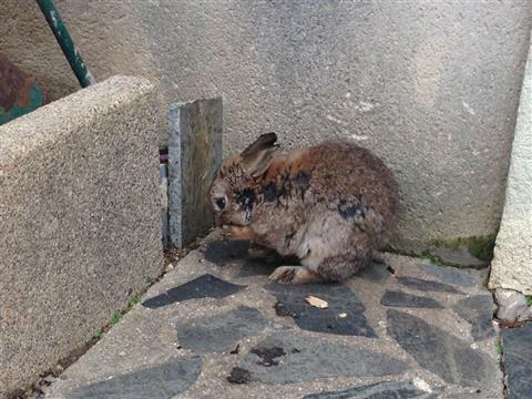 Cagnotte pour 10 lapins maltraités - Animaux Séniors