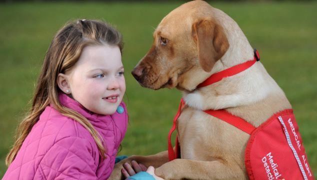 ACADIA - Un chien, un soutien au quotidien ! - ACADIA