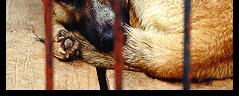 Aide à la stérilisation de chats et de chiens. -  Animals'33
