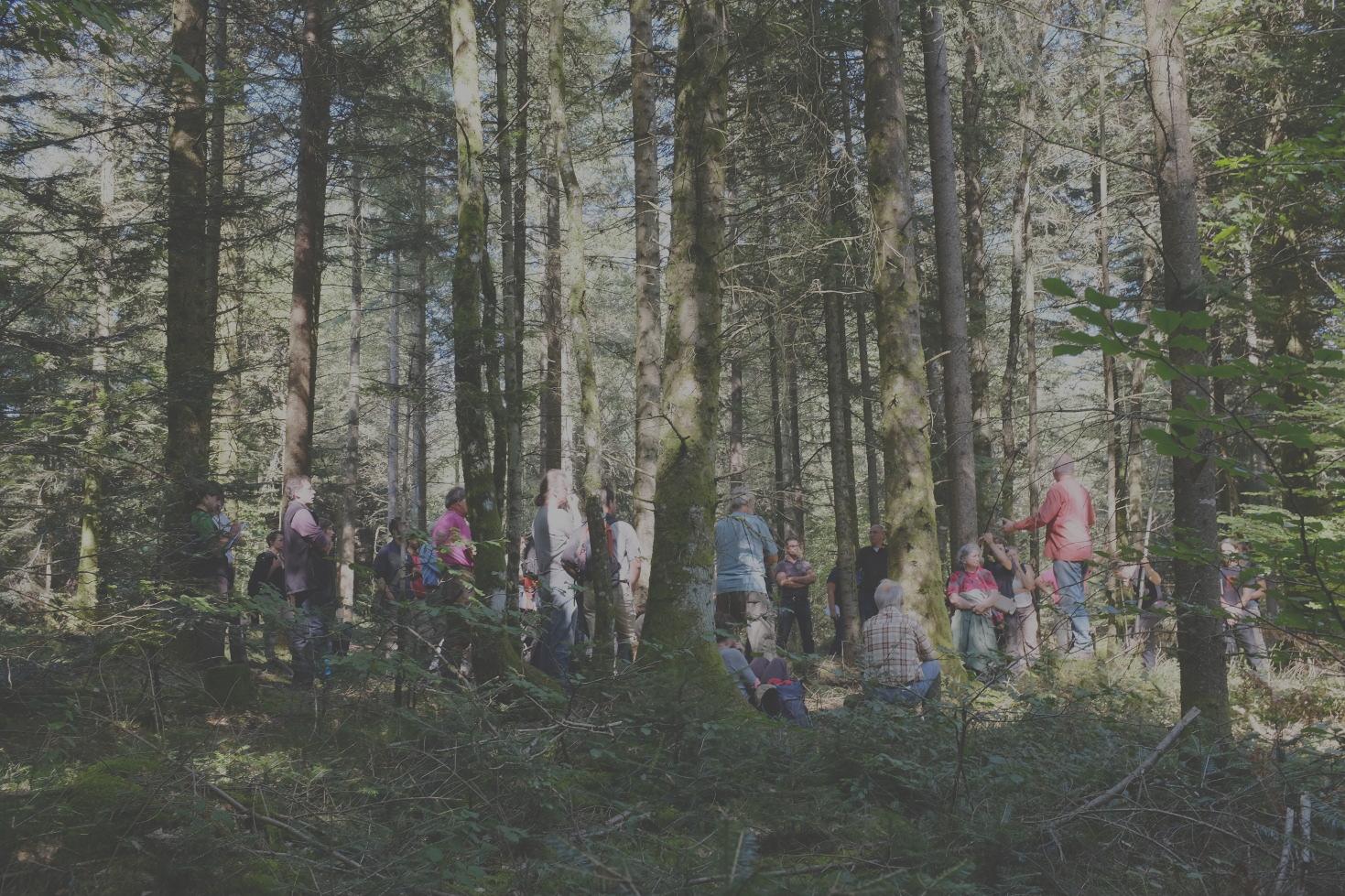 Adhérez au RAF ! - Réseau pour les Alternatives Forestières