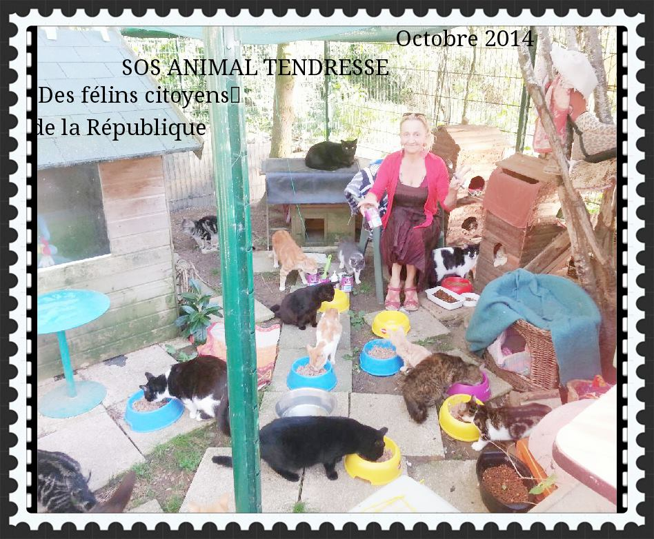 Adhesion 2015  - SOS ANIMAL  TENDRESSE