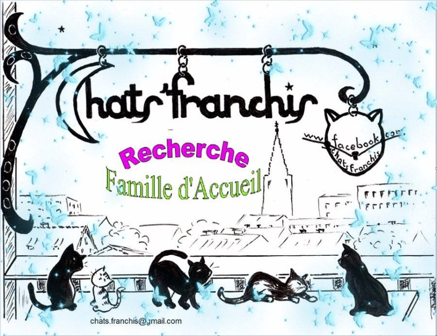 Adhésion Chats'franchis 2016 - 2017 - Association chats'franchis