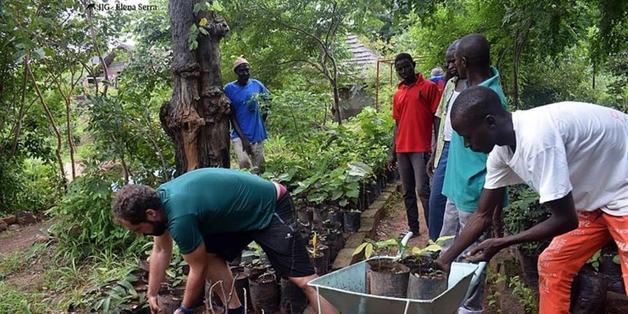 Soutenez le Département d'Agroforesterie de Dindéfélo  - Institut Jane Goodall France