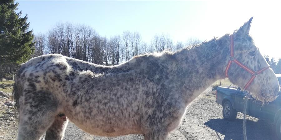 De l'aide pour Jéricho - Association Contre l'Abandon et la Maltraitance Animale (ACAMA)