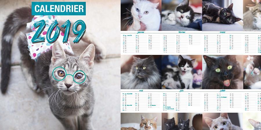 Calendriers 2019 - précommandes - L'école du Chat d'Ollioules