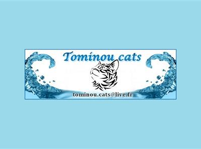 - Tominou Cats