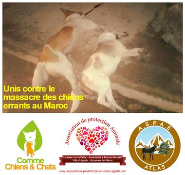 Unis contre le massacre des chiens errants au Maroc - Association Comme Chiens et Chats