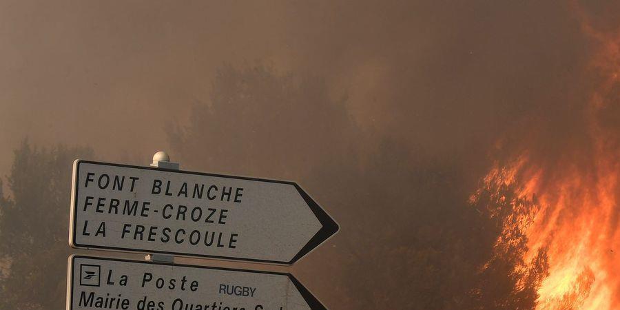 Replantons les arbres brûlés - POUR TA MÉTROPOLE