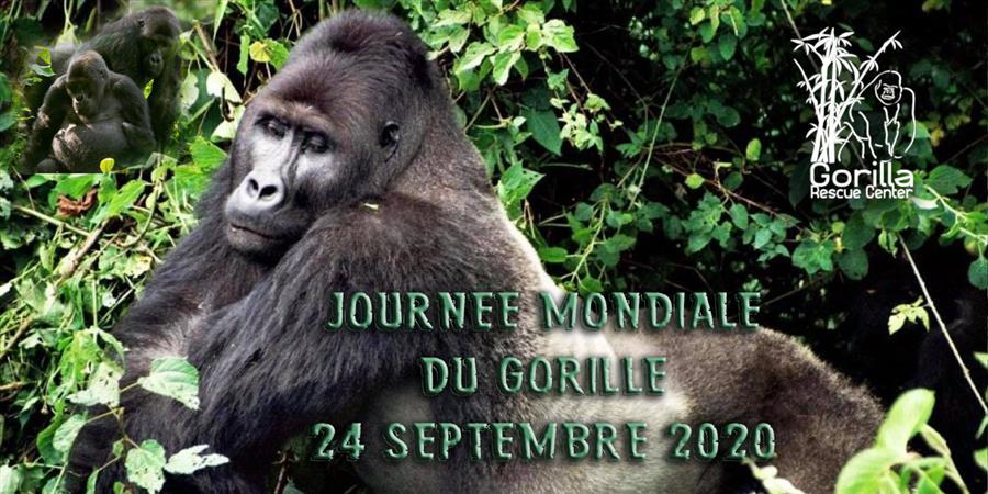 JOURNEE MONDIALE DES GORILLES - 24/09/2020 - association gorilla rescue center