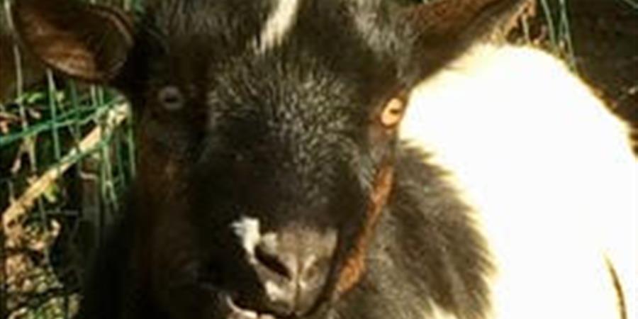 Parrainez Bénito - Animal cross