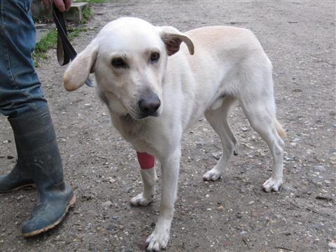 Opération chirugicale BALOO - SBPA (sociéte bolbécaise de protection des animaux)