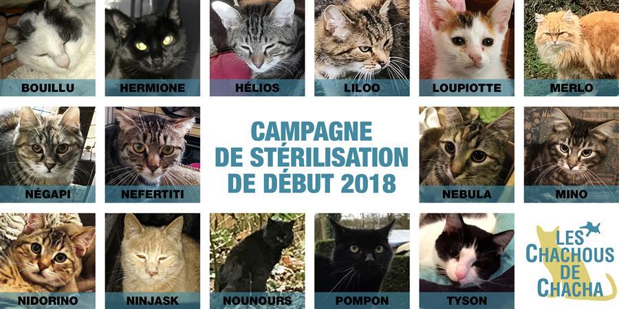 Stérilisation, identification et vaccination des Chachous de début 2018 - LES CHACHOUS DE CHACHA