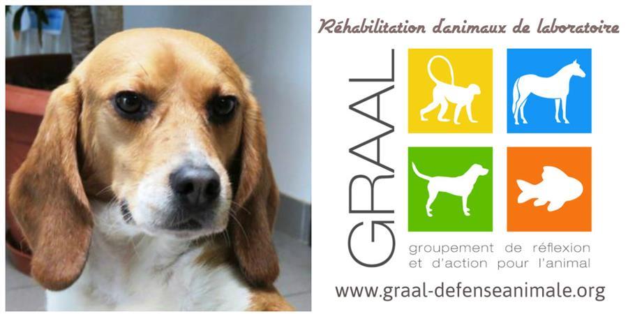 Faites un don pour le GRAAL - Groupement de Réflexion et d'Action pour l'Animal