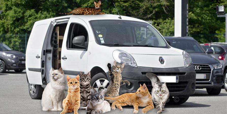Collecte de fonds pour une nouvelle voiture « Chachous Mobile » - LES CHACHOUS DE CHACHA