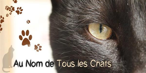 Chats - au nom de tous les chats