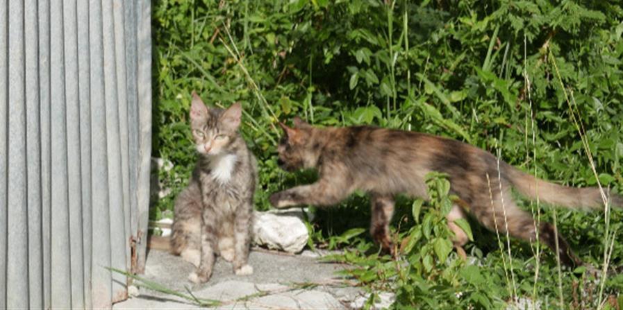 Stérilisons les 30 chattes d'une colonie à Capesterre !  - Les tas de poils de Marie-Galante