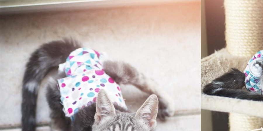 Parrainer Bloom - minette handicapée - L'école du Chat d'Ollioules