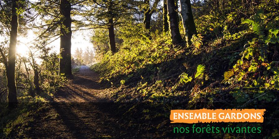 Une vidéo pour garder nos forêts vivantes - Forets en vie