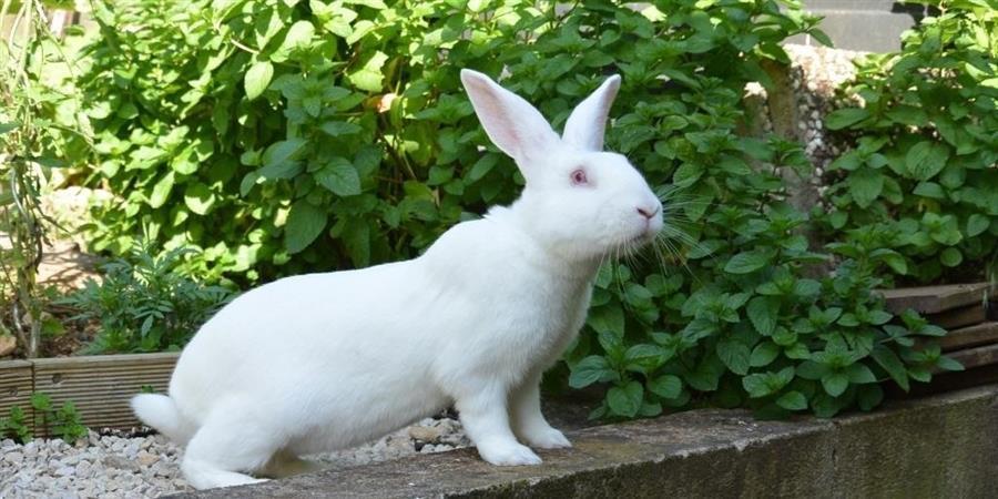 Faire un don à White Rabbit - White Rabbit
