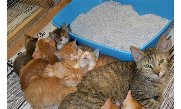 Aide A La Sterilisation De 15 Chats Et Aux Soins Adoption De 14 Chatons