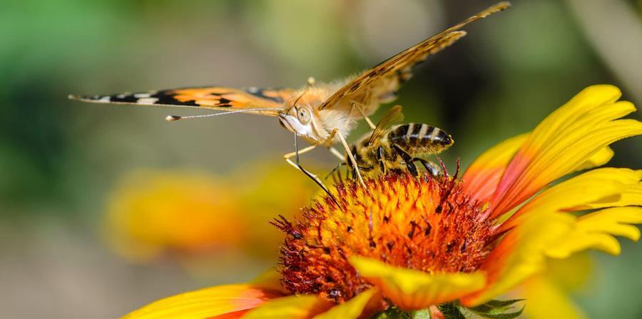Des corridors pour les pollinisateurs - Association Un rêve d'abeilles