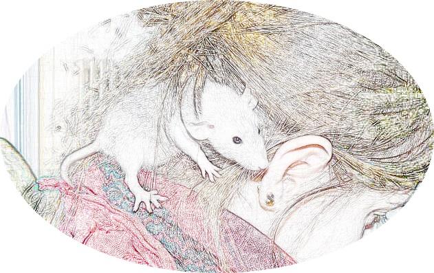 Adhésion à LAURAT - L'Association Unie autour du RAT domestique