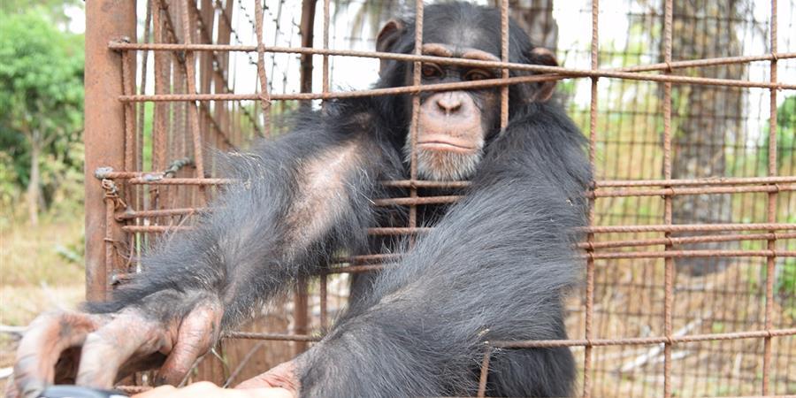 Une main tendue - Projet Primates