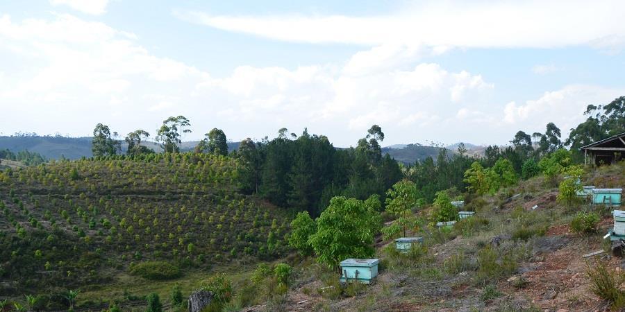 Parrainez une ruche à Madagascar! - Femmes En Action