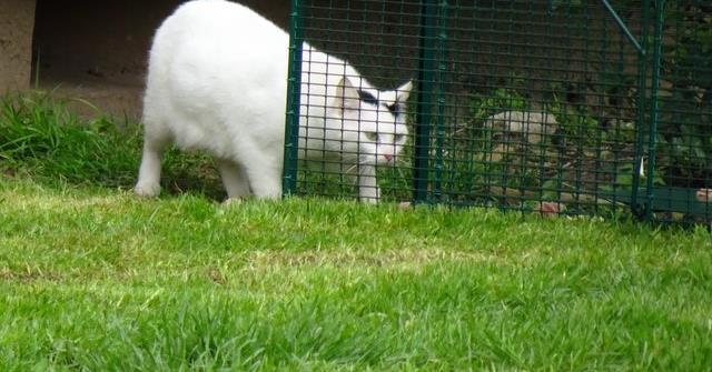 Appel aux dons pour la stérilisation des chats d'une cité - ADAD