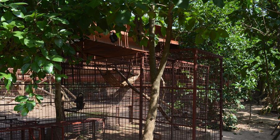 Aidez à la construction d'un nouveau bâtiment pour les babouins ! - MakiGo