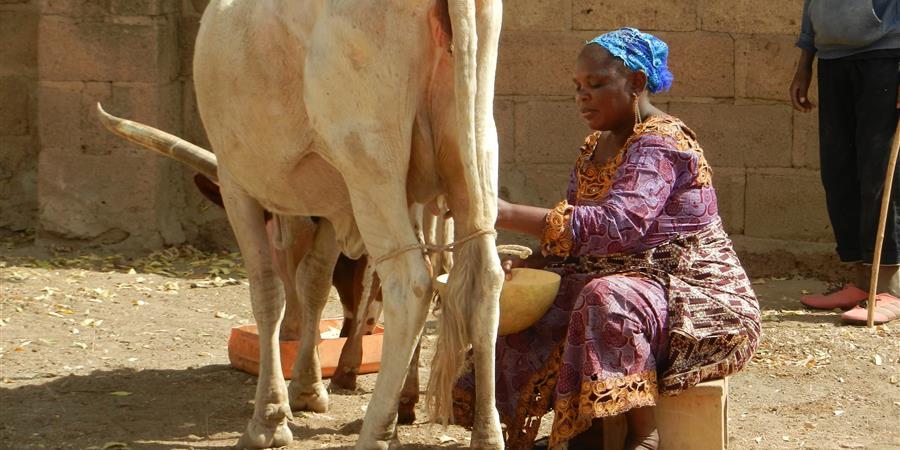 Relance de la mini laiterie Jam Naati de Barkoundouba ( Ziniaré) au Burkina Faso - DabaLimousin