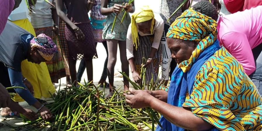 Préservation de la mangrove de Saint-Louis au Sénégal - Le Partenariat