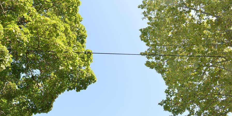 Sauvons les Ecureuils roux - Cohabitation sauvage pour une nouvelle alliance homme animal