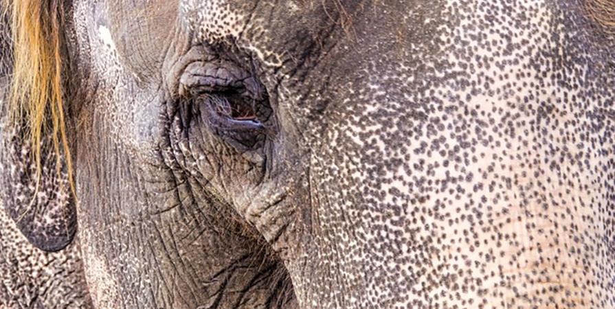 EVI pour les éléphants - Eco Volontaire International