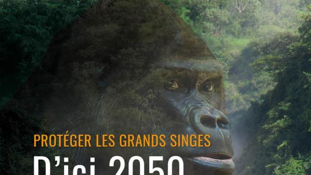 "Campagne d'affichage ""Protéger les grands singes"" - association gorilla rescue center"