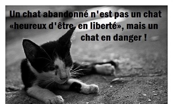 Pour la stérilisation des chats errants- CHAT L'ANGE 70 - Chat L'Ange 70