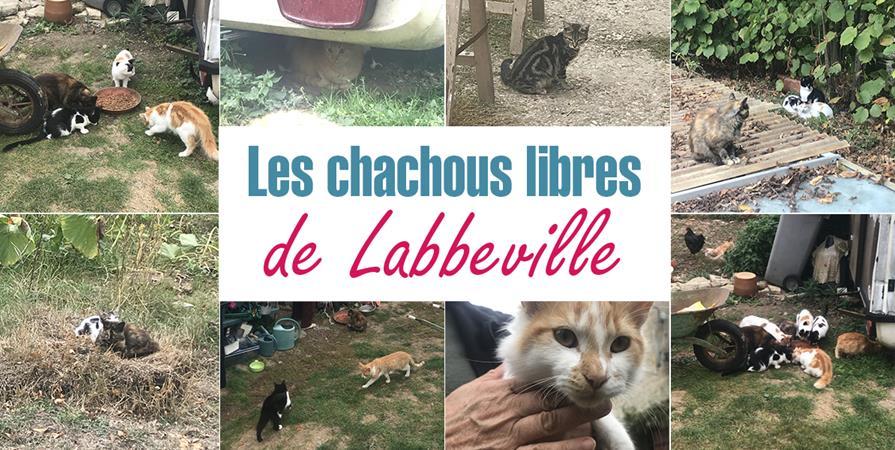 Les Chachous libres de Labbeville - LES CHACHOUS DE CHACHA
