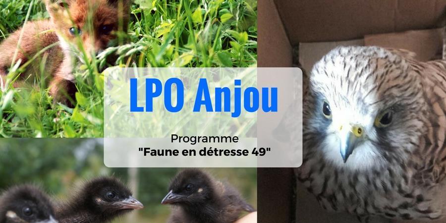 Volez avec nous au secours de la faune en détresse ! - LPO Anjou